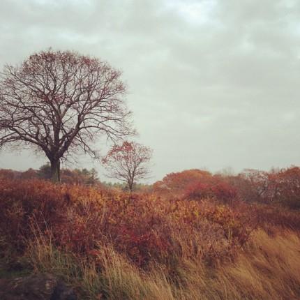 Fall Field with Barren Tree
