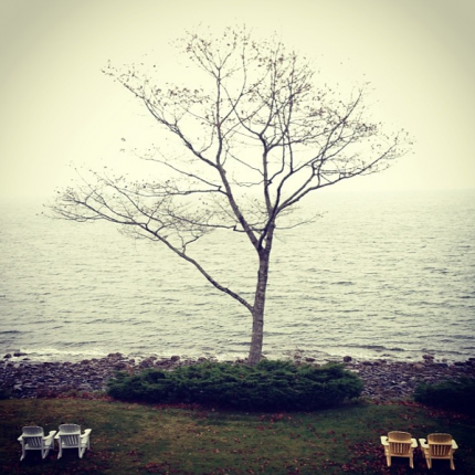 Tree and Adirondack Chairs Overlooking Ocean