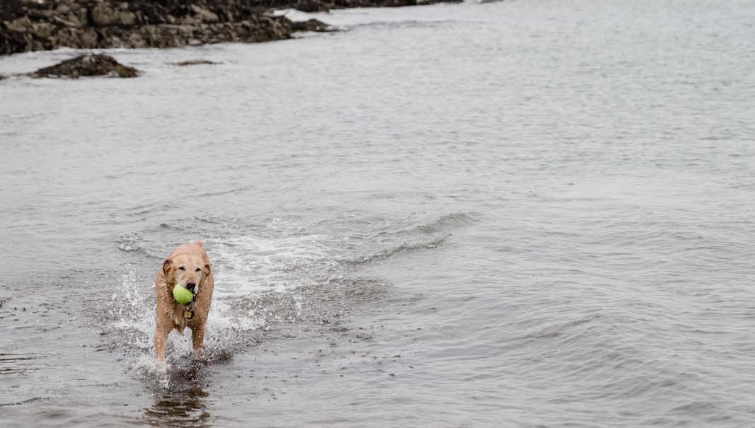 Dog-Friendly Beaches - The Maine Mag