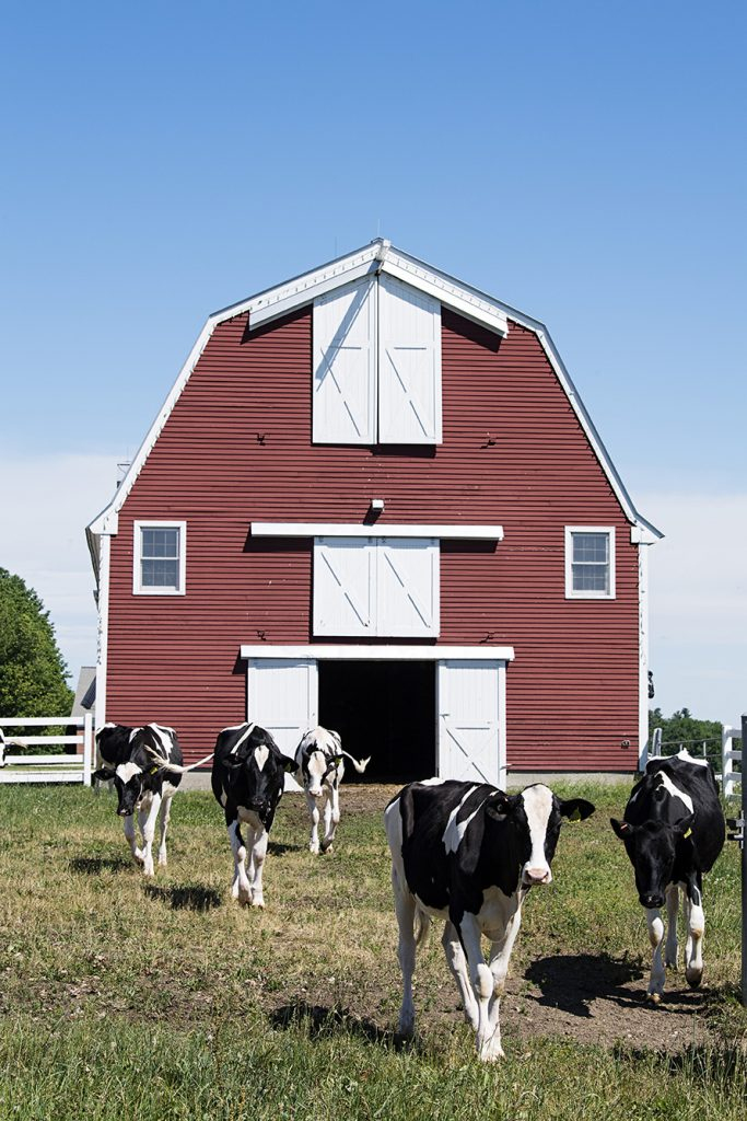 Pineland Farms is Maine's biggest producer of cheese.