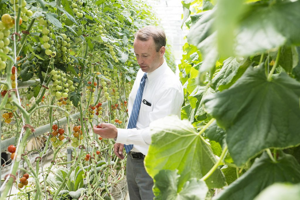 Libra Foundation's executive vice president Erik Hayward inspecting tomatoes at Pineland Farms Maine.