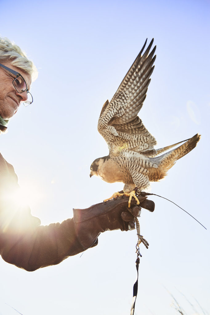 While watching birds of prey hunt above southern Maine marshes, a writer discovers that falconry can be a balm for broken times.