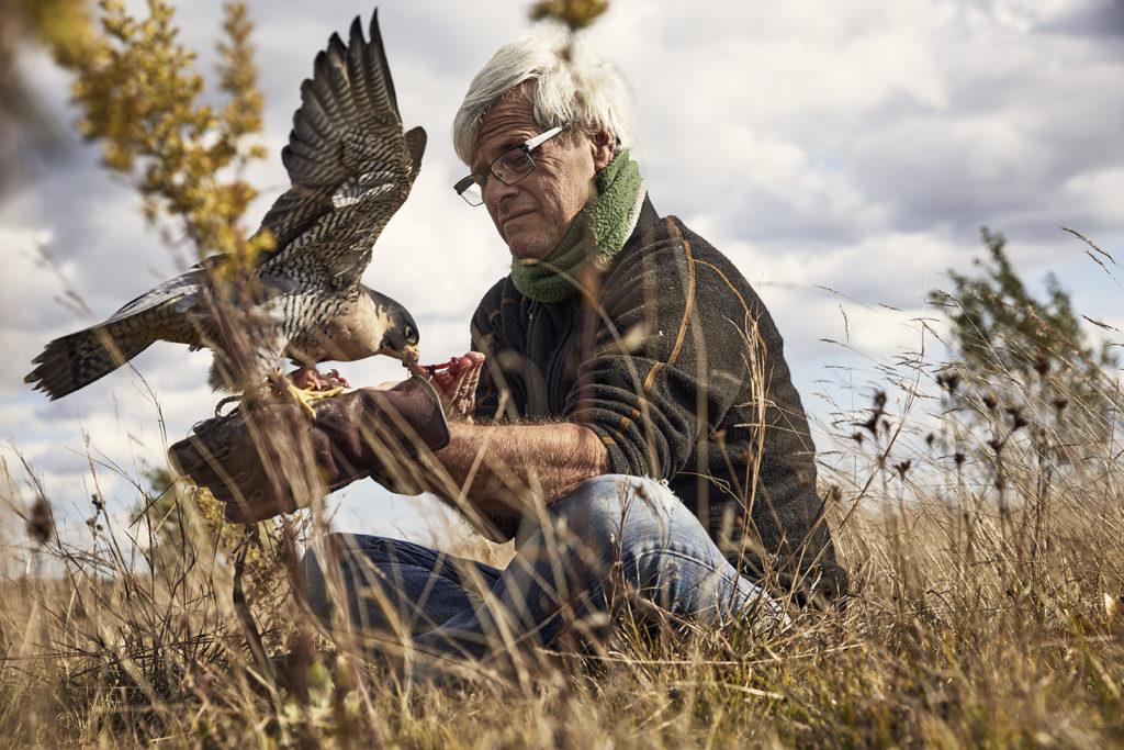 Falconry expert Spadone feeds Iggy, his falcon.